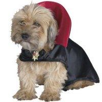 Crazy Halloween Dog Costume Ideas