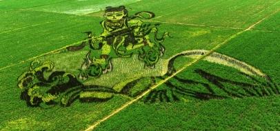 Rice paddy art from China?