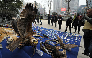 China leads int'l wildlife crime bust