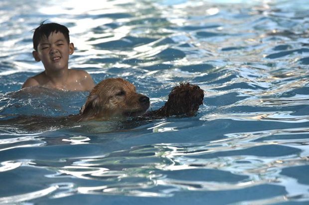 Dogs enjoy the cool summer under water