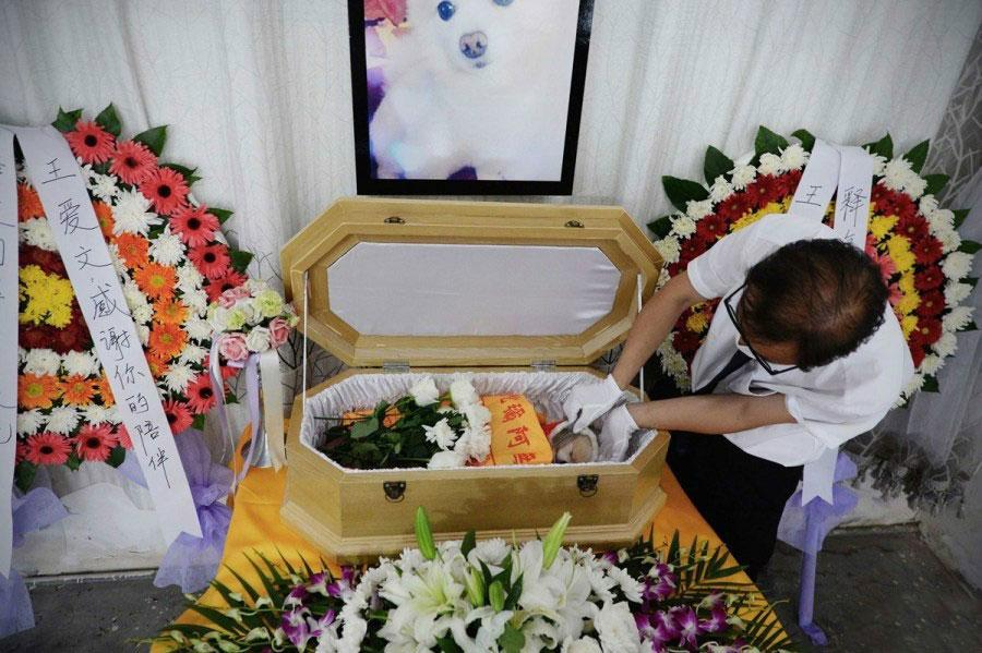 Enfoque de China: Chinos optan por servicios funerarios para descanso eterno de sus mascotas