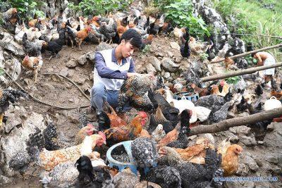 Animales de consumo humano china