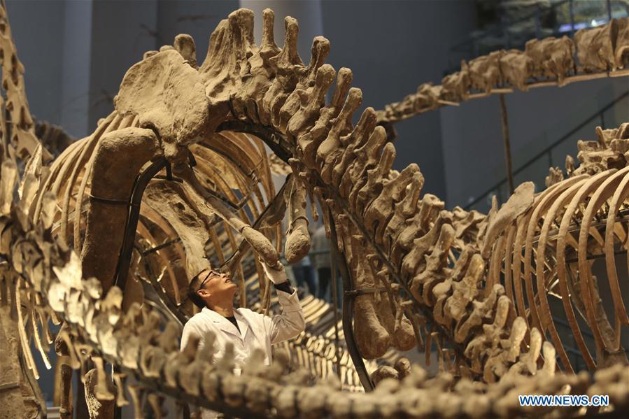 Fósiles de dinosaurio encontrados en China podrían replantear antiguos continentes