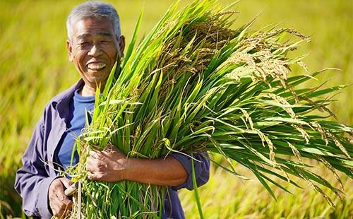 Proyecto de ley de China destaca seguridad alimentaria