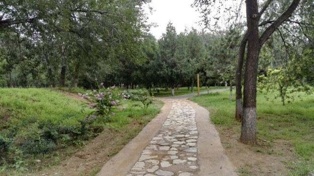 19 'bosques' urbanos mejorarán la vida residencial de Beijing