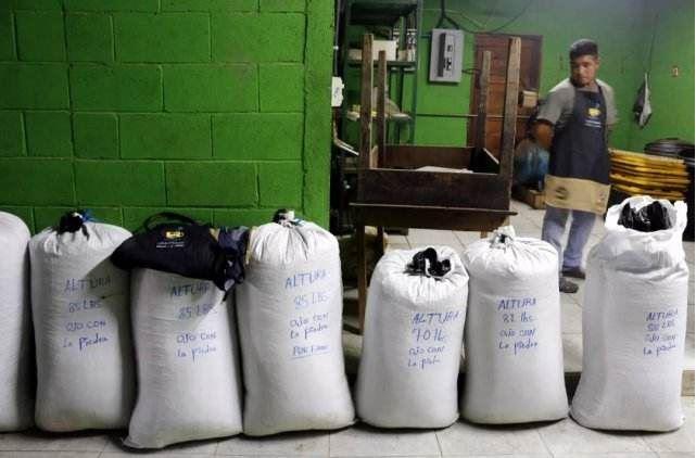 ESPECIAL: Entusiasmo, la mejor arma de un cafetalero salvadoreño en la CIIE