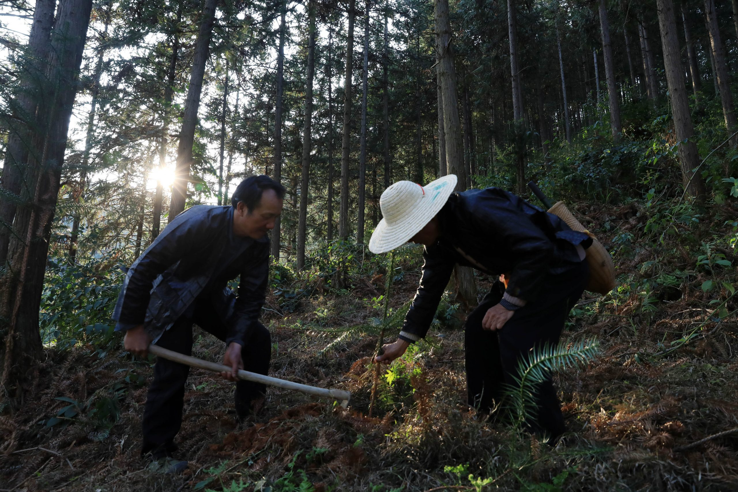 Programas ecológicos de China sacan de la pobreza a más de 20 millones de personas