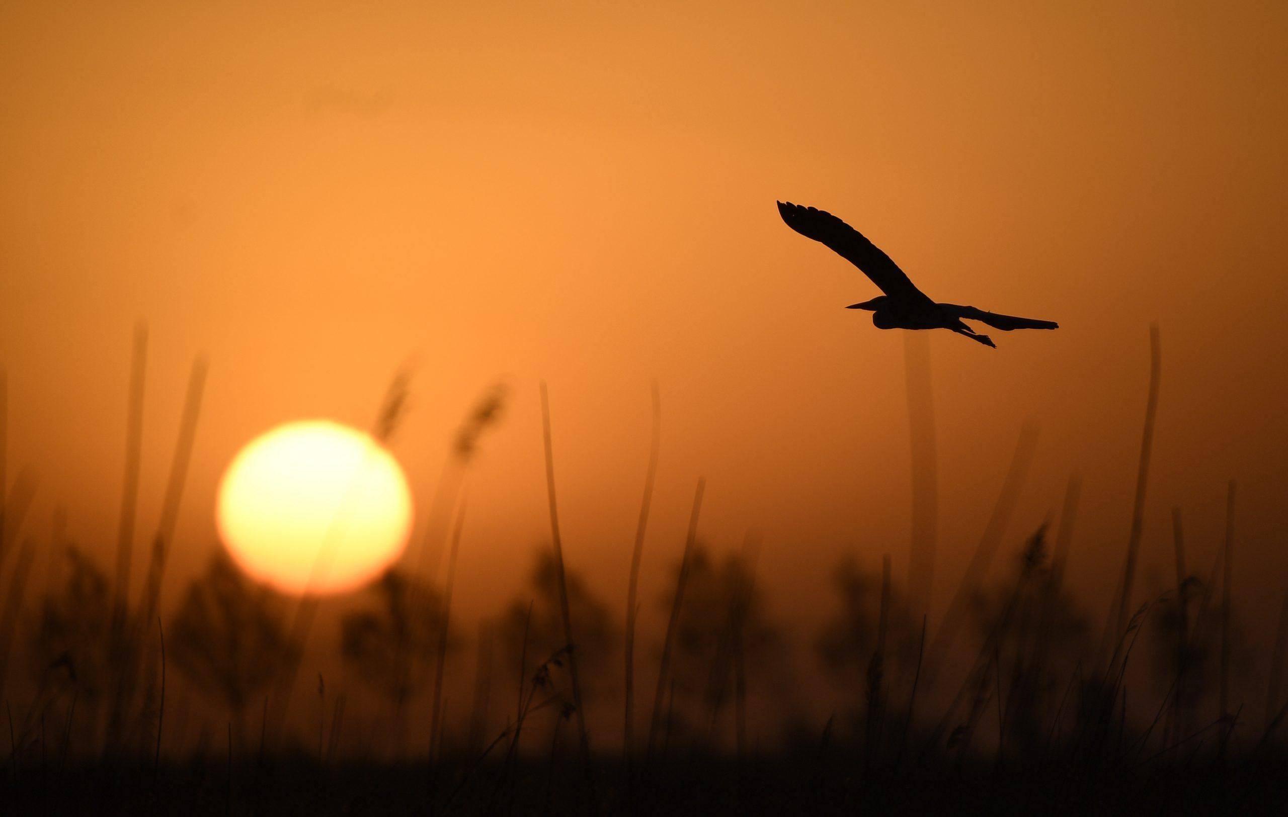Inauguran en Beijing exposición fotográfica sobre protección de vida silvestre