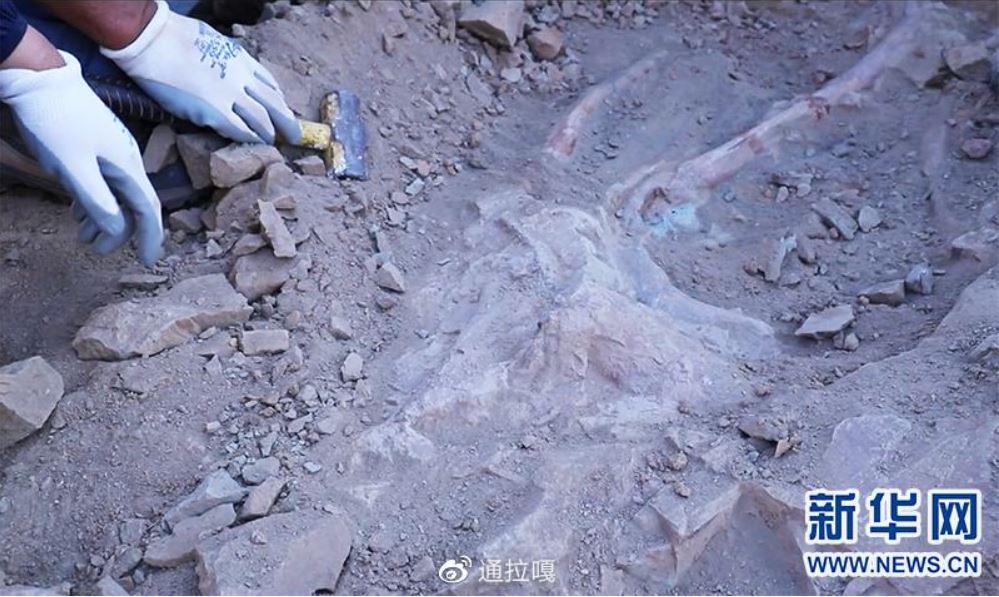Hallan raro fósil de cría de dinosaurio en norte de China