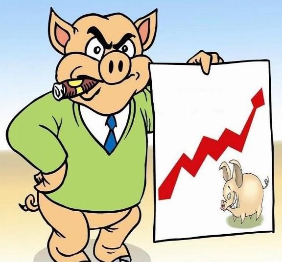 豬肉漲價的最大受益者是誰?_養豬信息網_這里總有您需要的豬業資訊_廣東省養豬行業協會主辦
