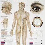 Poster Körperakupunktur Kombination