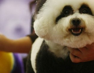 Understanding China's Pet Market's Runaway Growth
