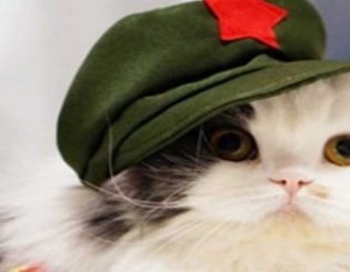 China's Correlation Between Video Games and Kittens