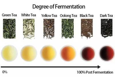 Figura 2- tè e fermentazione