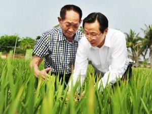 """Le ministre de l'Agriculture Han Changfu (à droite) et l'agronome Yuan Longping, connu comme le """"père du riz hybride"""", ont inspecté mardi une culture à Sanya, la province du Hainan. (Quotidien du peuple)"""