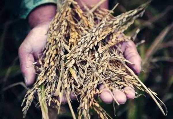 Levée des restrictions à l'importation sur les produits agricoles américains