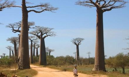 Ligne directe Chine-Madagascar