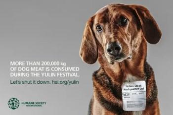 Stop Yulin Dog Meat Festival