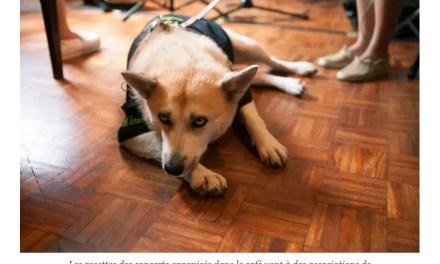 A Taïwan, des voix pour les animaux