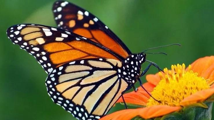 Source des Papillons de Dali, symbole du romantisme