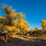 Un plan de protection écologique pour «une belle Chine»