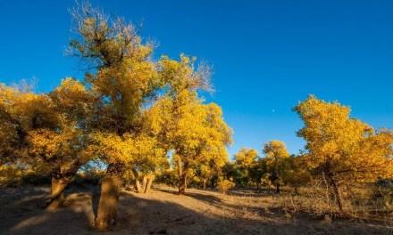 Une loi pour la Journée nationale de la plantation d'arbres