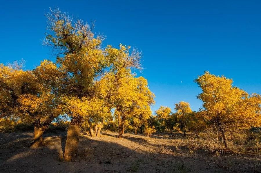 Les forêts, nouvelles protégées du gouvernement