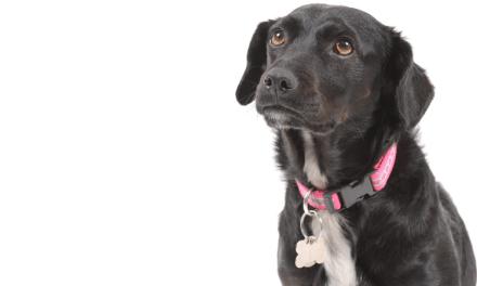Vers une interdiction de la consommation de chien et de chat