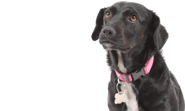 Les chiens bientôt reconnus comme animaux de compagnie
