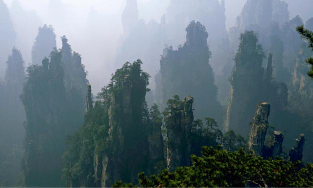 L'administration des forêts améliorent le fonctionnement des parcs nationaux