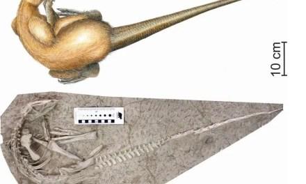 Découverte d'une nouvelle espèce de dinosaure originaire de Chine