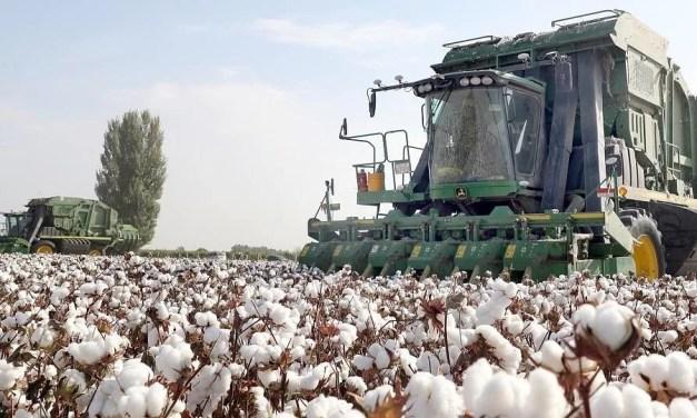 «Il n'y a pas eu et il n'y a pas de travail forcé dans la production de coton au Xinjiang»