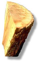 聖經考古學﹕「歌斐木」是什麼?