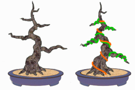 how to wire bonsai tree the right way rh chinesebonsaigarden com