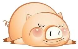 Image result for 2019 year pig