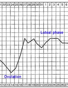 Basal body temperature chart also and cervical mucus on infertility treatment rh chinesegenderchartfo