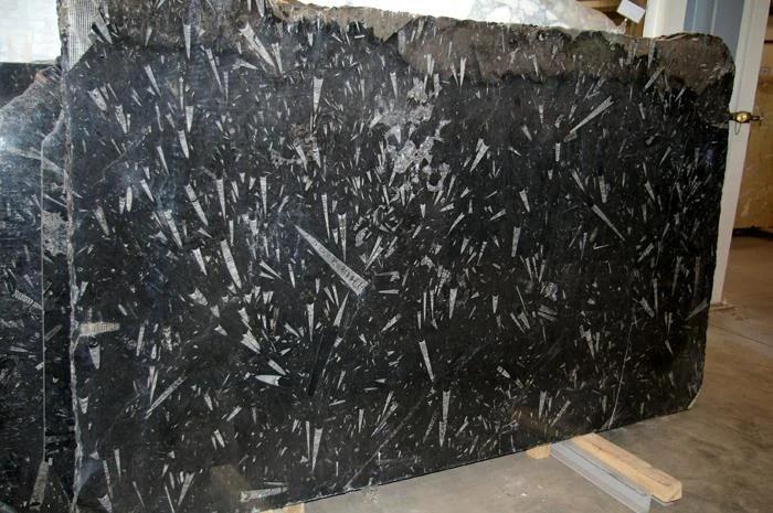 Polished Black Fossil Marble Slab Tile Supplier In China