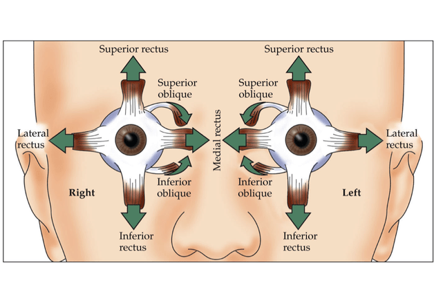 Improve Vision with Acupuncture : Chinese Medicine Living