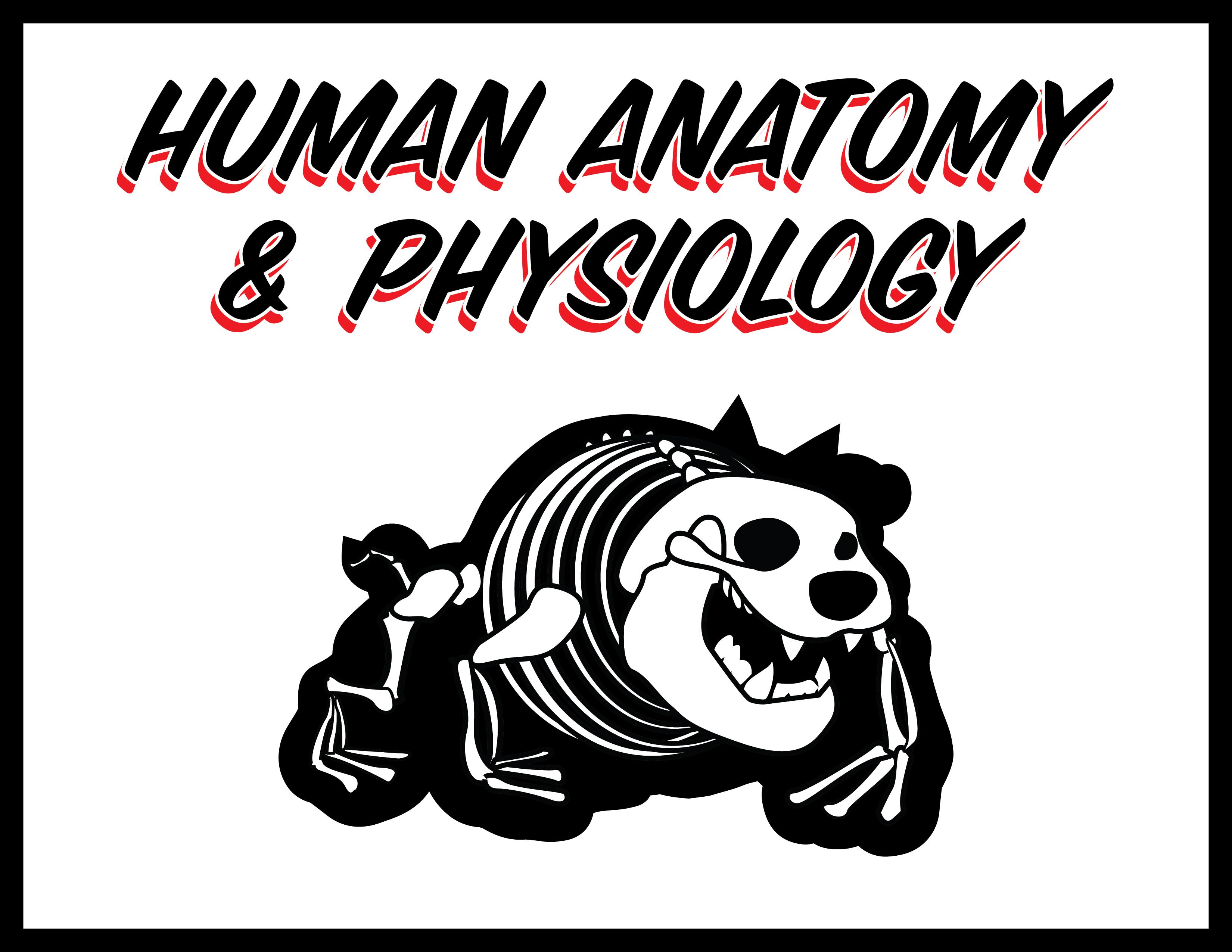 Davis, Ashley / Honors Human Anatomy & Physiology