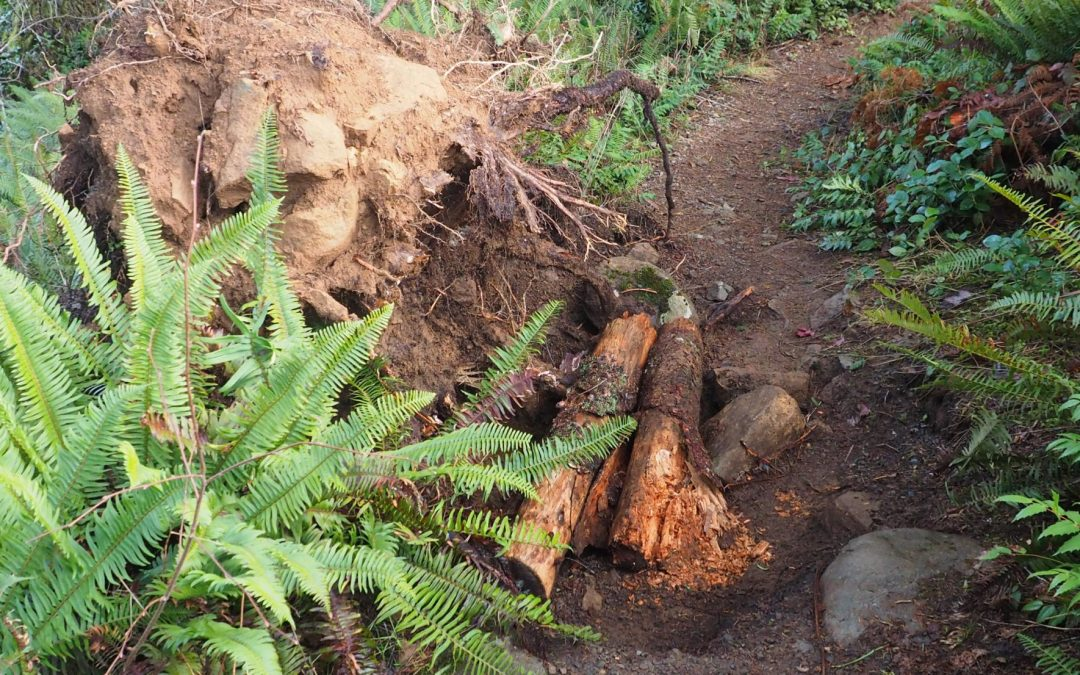 Trail Damage on Bells Mountain Trail