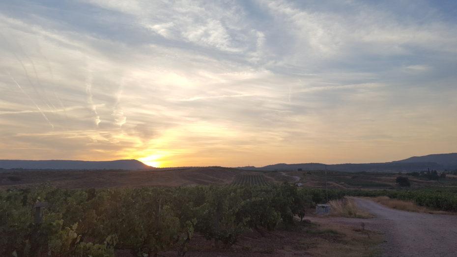 L'alba con le numerose vigne della Rioja