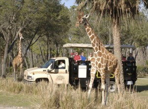animalkingdomsafari