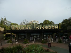 Are More Attractions Heading to Pandora - The World of Avatar, Animal Kingdom? 1