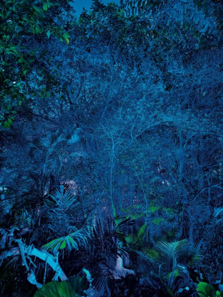 Nighttime in Pandora 3