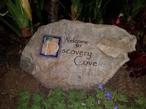 Discovery Cove's Paradise Nights Review 1