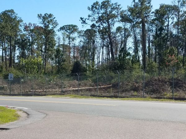 Photos: Disney is Clearing Trees to Begin Tron Construction 2