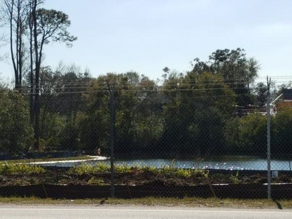 Photos: Disney is Clearing Trees to Begin Tron Construction 6