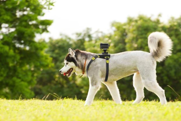 Sony-Action-Cam-Dog-Mount