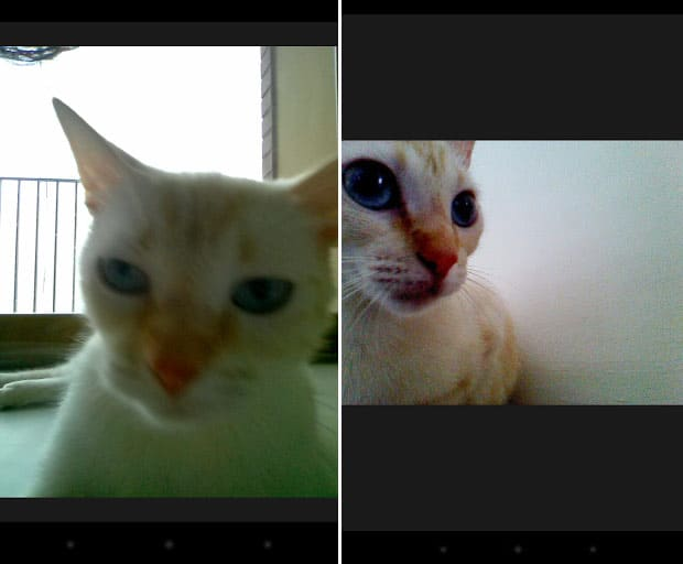 snapcat is snapchat for cats chip chick