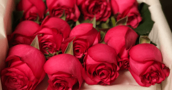 If You Live In These Major Cities, You Should Only Be Ordering Roses Off This Website